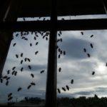 api studio aprile 2020